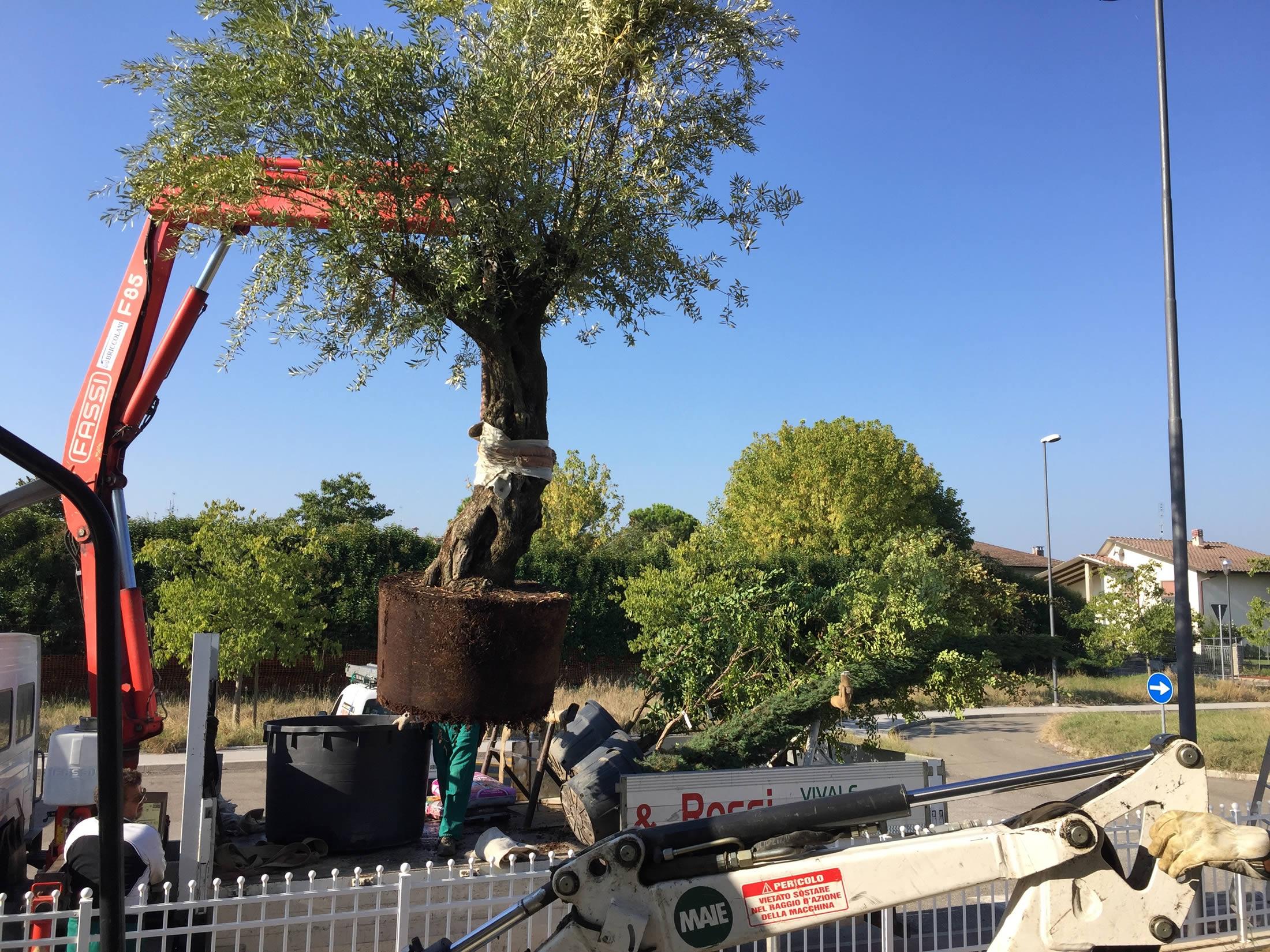 Allestimento Giardini Privati e Aree Verdi