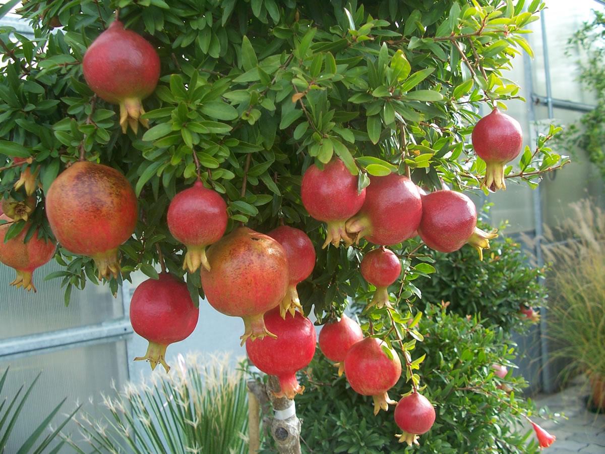 Vivaio alberi da giardino for Vendita piante da giardino